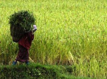 Economy of Gangtok