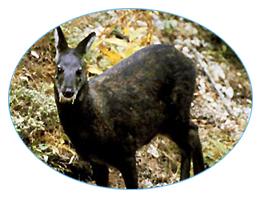 Wildlife sanctuaries in Kyongnosla