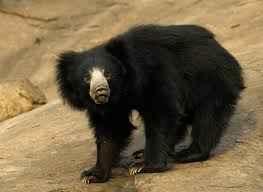 Ghaziabad Hastinapur Wildlife Sanctuary Article