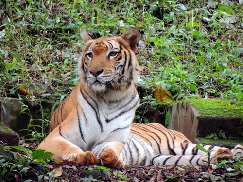 Bhagwan_Mahavir_Wildlife_Sanctuary