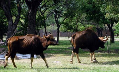 Wildlife in Ponda