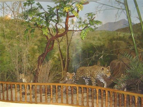 Ratan Mahal Wildlife Sanctuary from Godhra