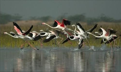 Porbandar Wildlife Sanctuary near Godhra