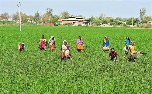 Farming in Gujarat