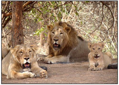 Wildlife Sanctuaries in Gujarat