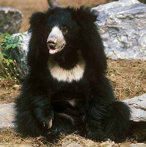 Jessore Sloth Bear Sanctuary