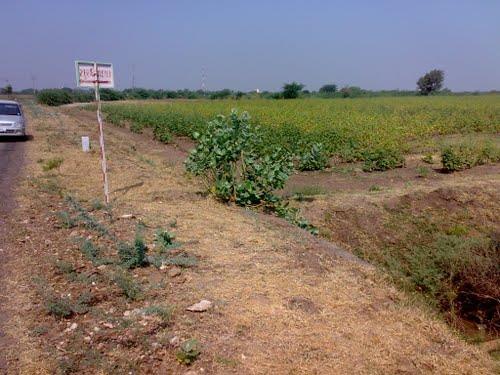 Around Dhola
