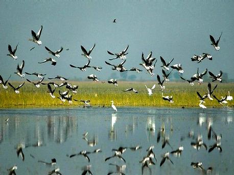 Birds at Nal Sarovar Bird Sanctuary