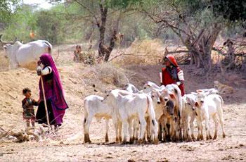 Life of people in Dhrangadhra