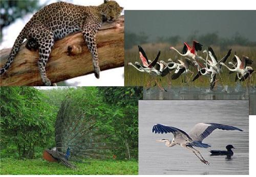 Haryana National Parks