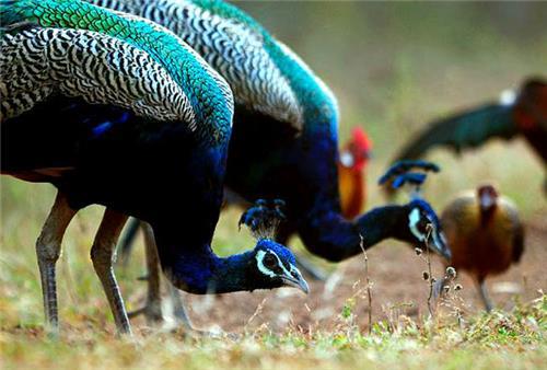 Wildlife Sanctuary in Himachal Pradesh