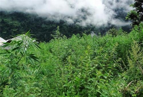 Malana in Himachal Pradesh