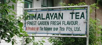 Tea Industry in Palampur