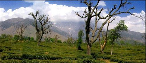 Topography of Palampur: