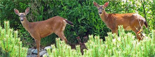 Wild life at Takhni Rehmapur Sanctuary in Hoshiarpur