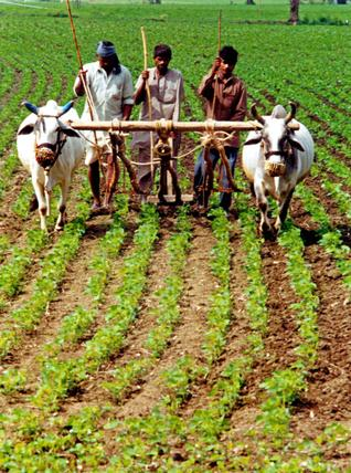 Agrarian Economy in Jagdalpur