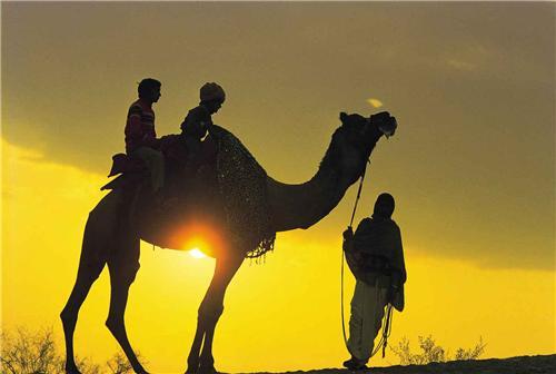 Camel Safari during sunset