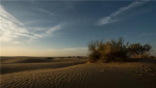 Desert National Park in Jaisalmer