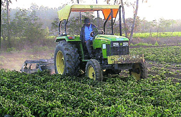 Agriculture as Business in Jalandhar