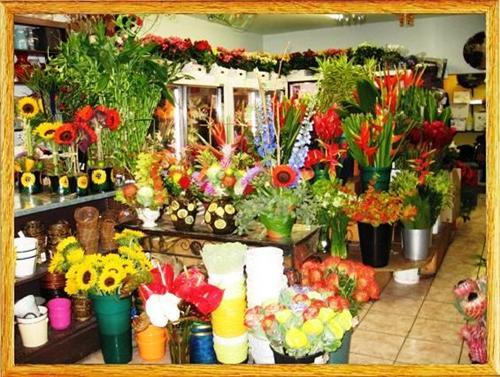 Famous Flower Shops in Jalandhar