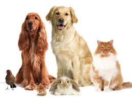 Pet Stores in Jalandhar