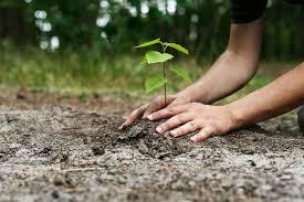 Environment Welfare societies in Jalandhar