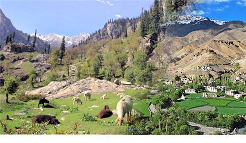 Majestic Ambiance of Nandini Wildlife Sanctuary in Jammu