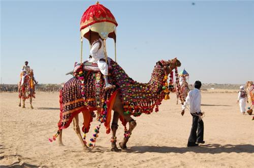 Camel Ride from Jhunjhunu