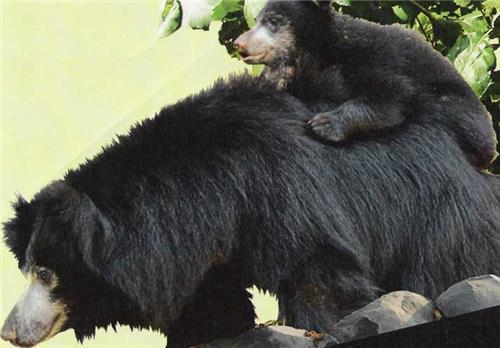 Ratanmahal Wildlife Sanctuary