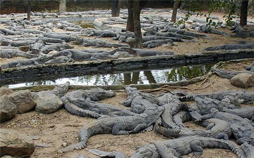 Crocodile bank in Kancheepuram