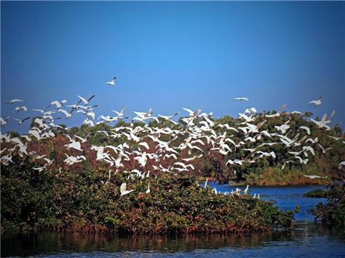 Birds in Vedanthangal Bird sanctaury