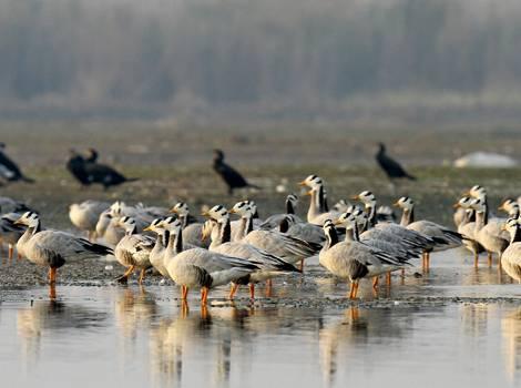 Birds in Kanljli Wetand