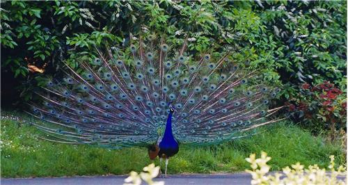 Bhim Bandh Wildlife Sanctuary