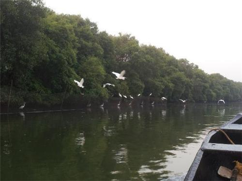 Thattekkadu Bird Sanctuary Kochi Address
