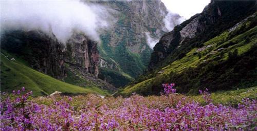 Dzukou valley Tourist Attraction