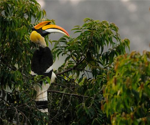Birds inside the Khokhan Wildlife Sanctuary in Kullu