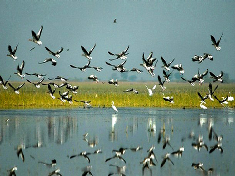 Best time to visit in Thol Wildlife Sanctuary in Mehsana
