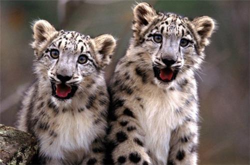 Fauna in Great Himalayan National Park
