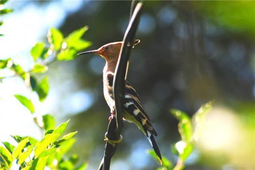 Fauna at Nature Park in Manali