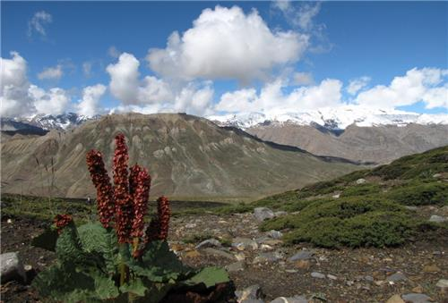 Exquisite flora in Pin Valley National Park near Manali
