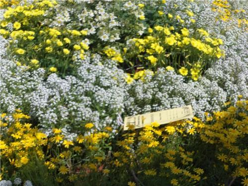 Garden in Meerut