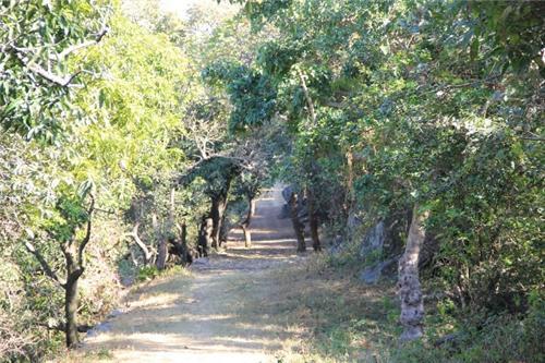 Tiger path Mount Abu