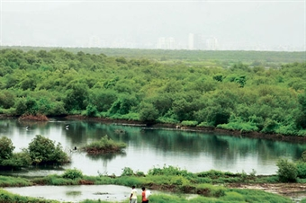 "mangroves in mumbai Mumbai has successfully completed the project tiled ""impact of special economic zone  important flora (mangroves and mangrove associates) 14."