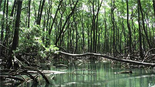 Nature Treks in Mumbai