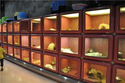 Pet Shops in Nashik