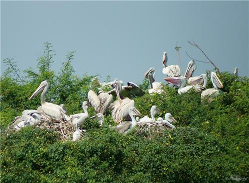 Nelapattu Bird Sanctuary near Nellore