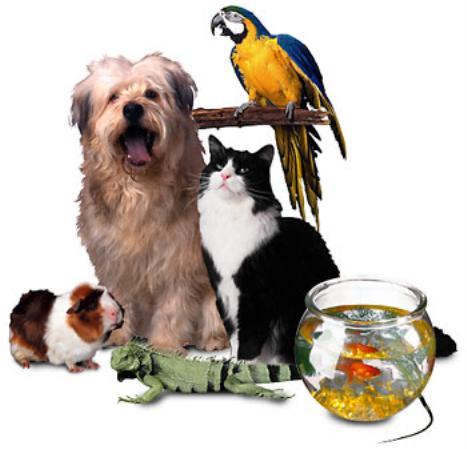 Pet Stores in Noida