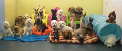 Pet Clinics in Panchkula