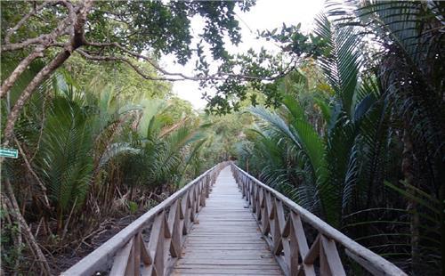 Dhani Nallah Mangrove Walkway at Rangat in Andaman
