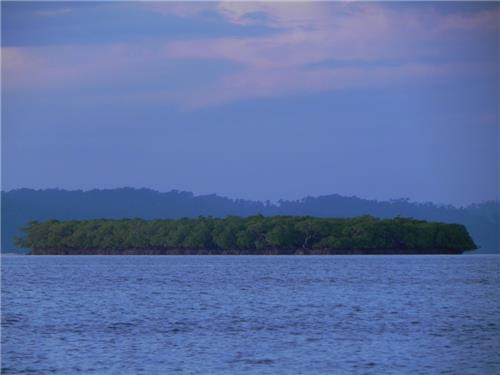 Mangroves at the Parrot Island